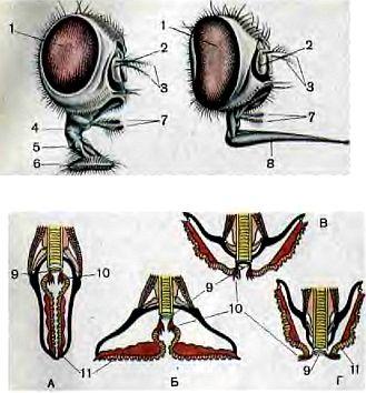 как мухи размножаются фото